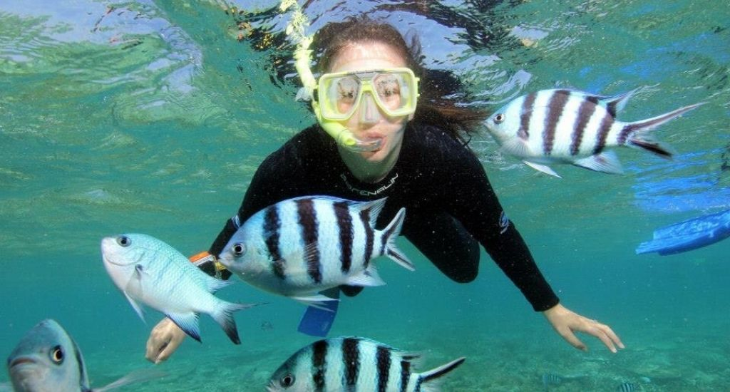 Entrepreneur snorkeling with fish in Great Barrier Reef